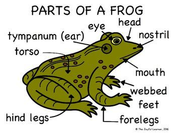 Longhorn Chart - The Frog